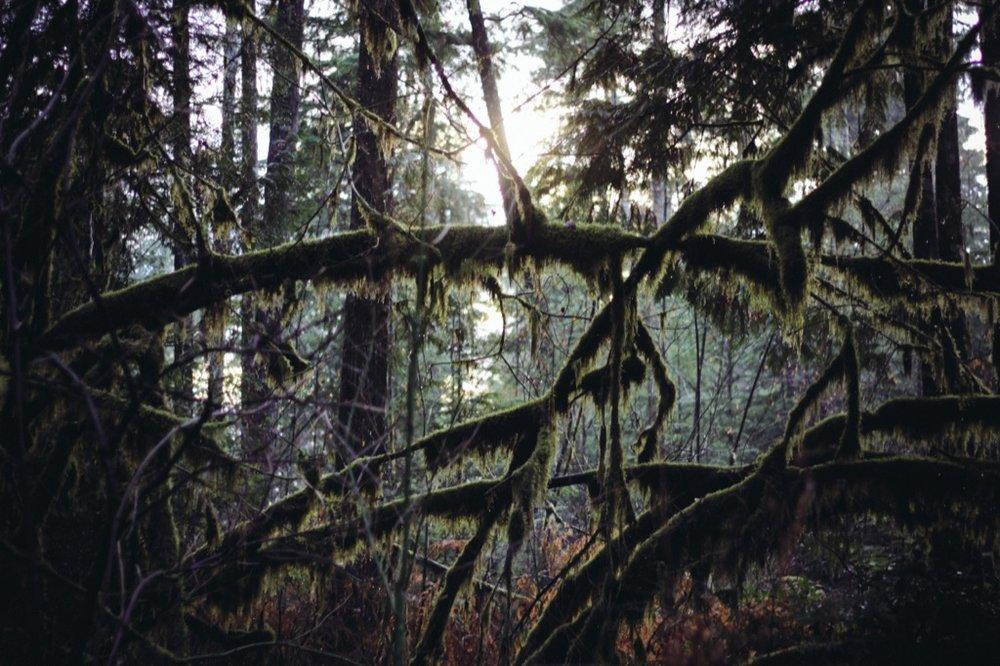 Christmas-Eve-Squamish230.jpg