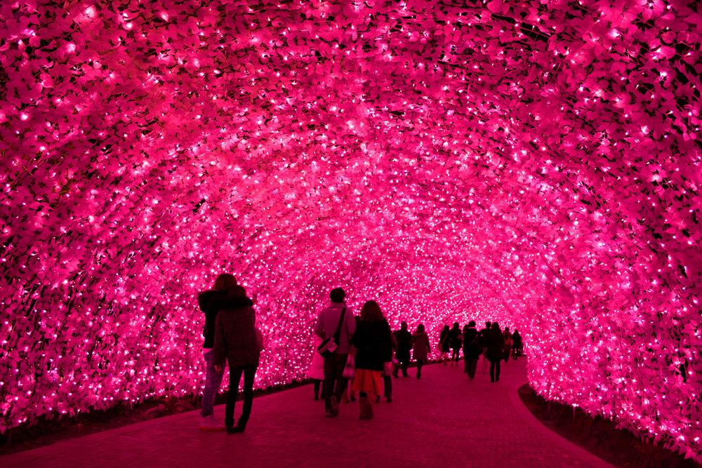 Kawazu-Sakura-Light-Tunnel.jpg