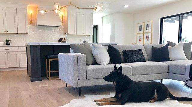 Ireland's debut as a model at the #thunderbird project 🐾. Happy Holidays everyone! #londonpiercedesign #germanshepherd #gsd #gsdofinstagram #dogmodelsofinstagram #interiordesign #designer #interiordesigner #realestate #scottsdaledesigner #design #interiors #designlife