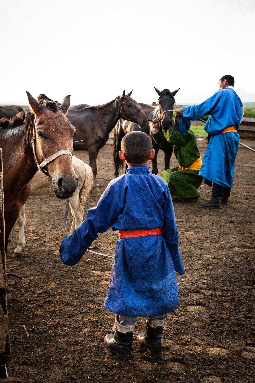 dressage, Mongolie