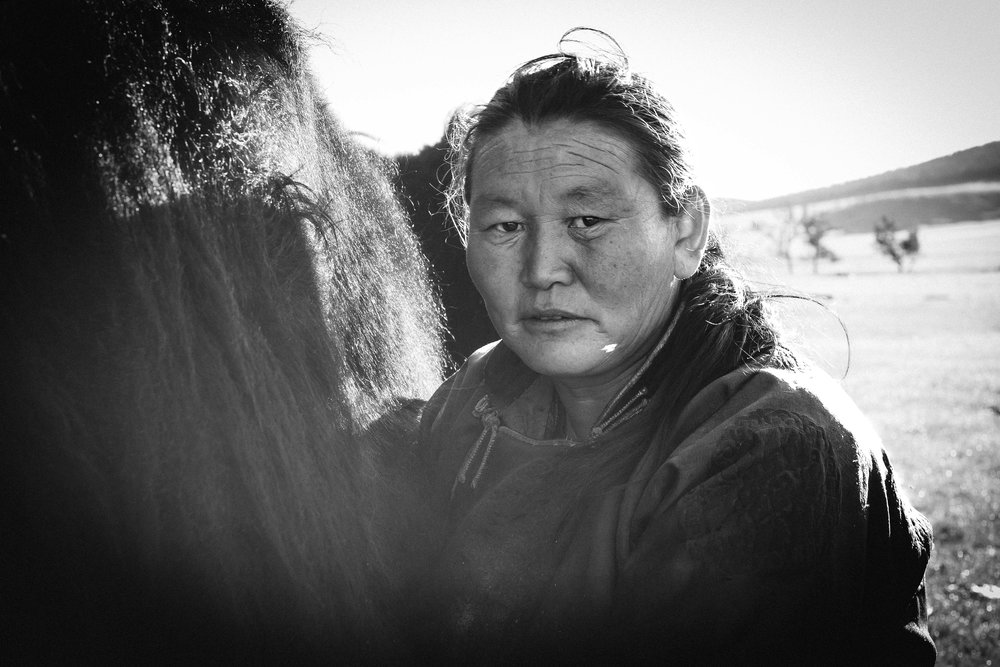 La traite, Mongolie