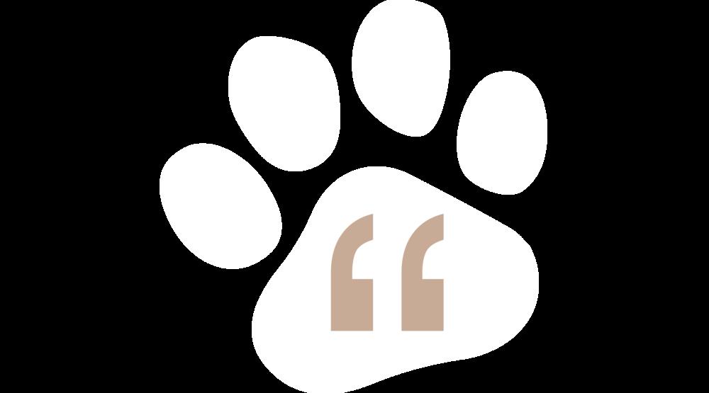 woof-squad-reviews-dog-walking