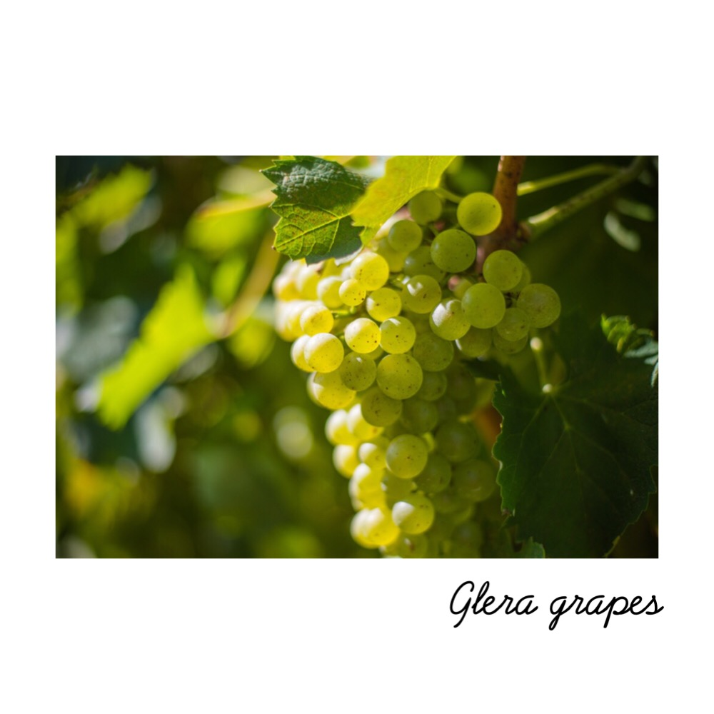 - Glera is a white variety of grape which is mainly cultivated for Italian sparkling wine. Prosecco is made from at least 85% of grapes of the Glera variety and no more than 15% of the local cultivars Verdiso, Bianchetta, Perera and Glera Lunga.