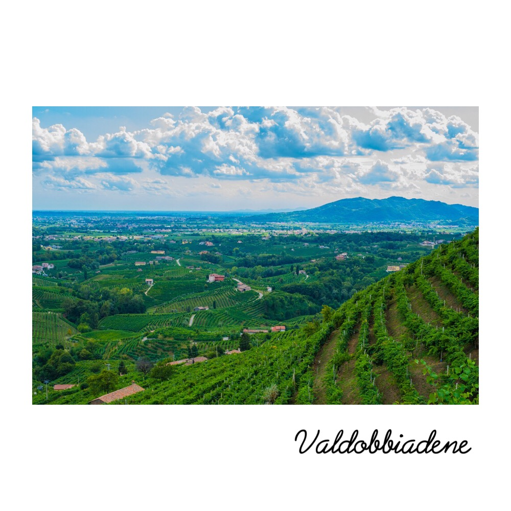 - The history of Prosecco began in the Conegliano Valdobbiadene zone more than three centuries ago.