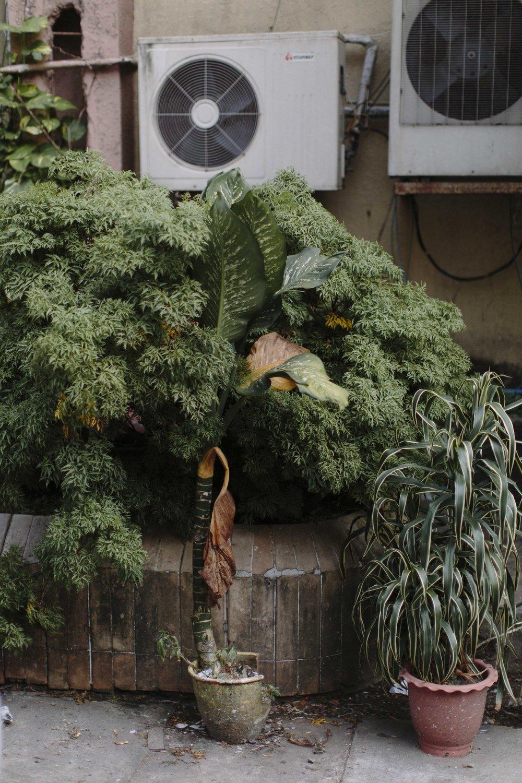 MacCormick_Yangon_Gardens-26.jpg