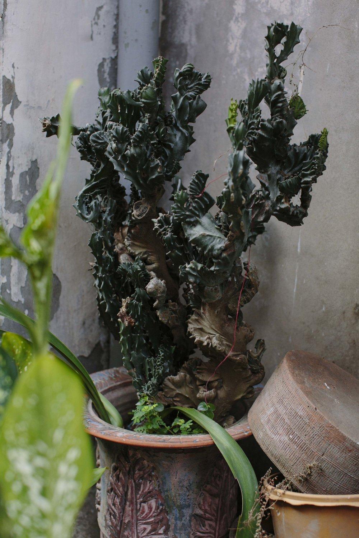 MacCormick_Yangon_Gardens-34.jpg
