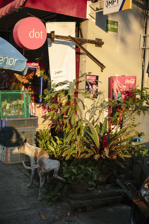 MacCormick_Yangon_Gardens-29.jpg