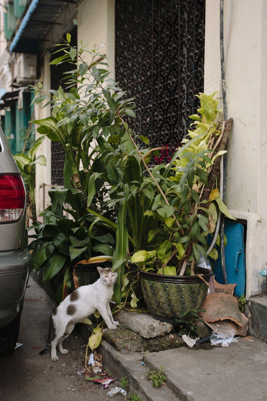 MacCormick_Yangon_Gardens-32.jpg