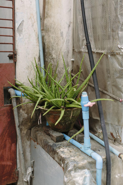 MacCormick_Yangon_Gardens-78.jpg