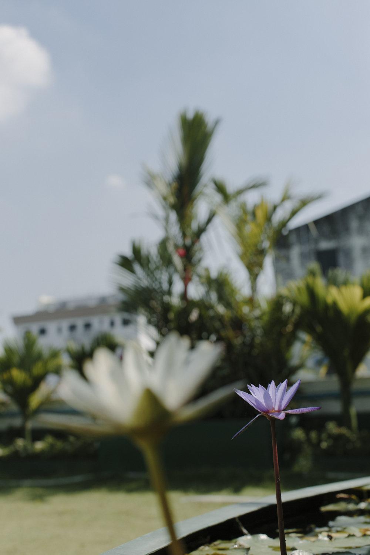 MacCormick_Yangon_Gardens-74.jpg