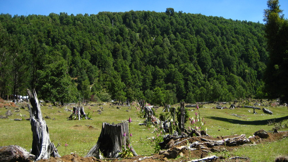 A logging area in southern Chile