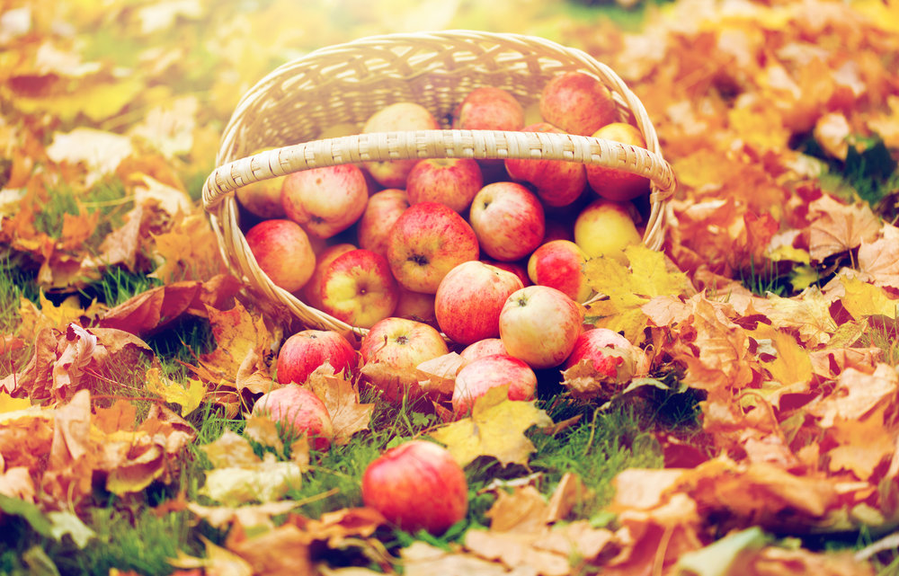 wicker-basket-of-ripe-red-apples-at-autumn-garden-P3E7L9R.jpg