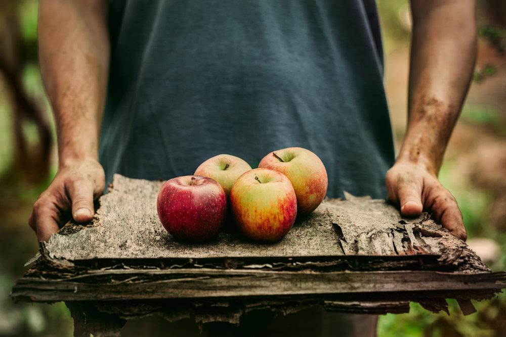 apples-P9D3D9G.jpg