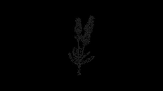 Lavender (Lavandula officinalis).png