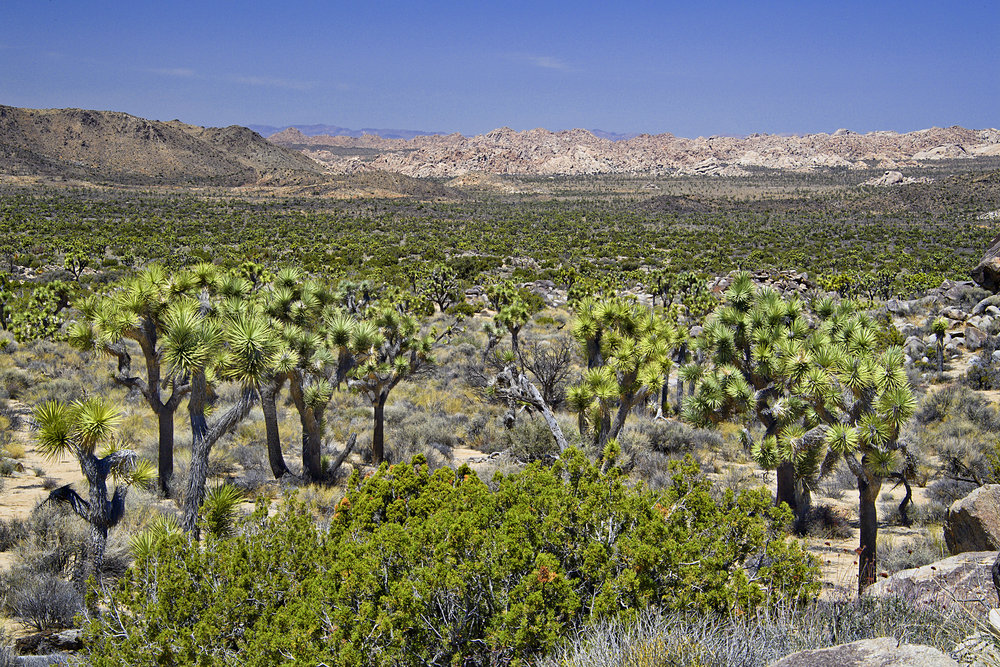 Overlooking Joshua Tree Park from Keyes View Road -