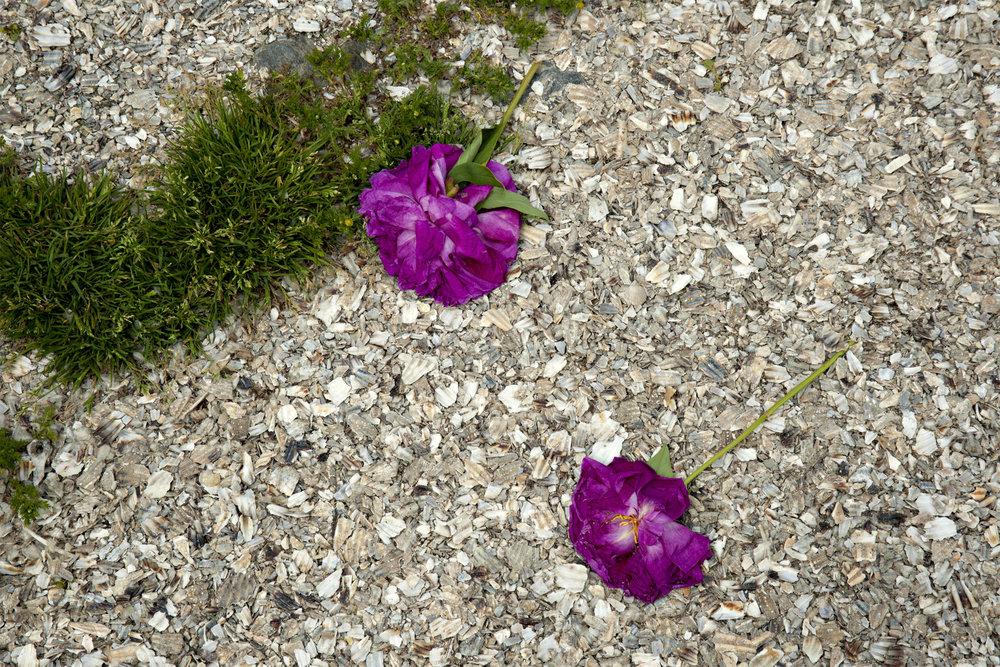 Two Purple Flowers -