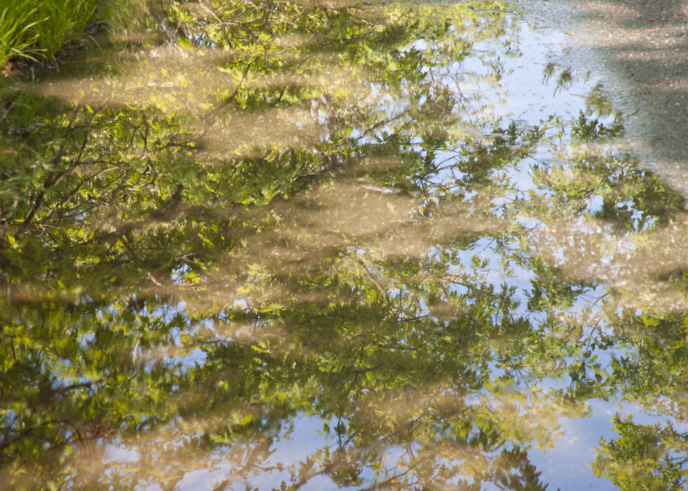 Reflection of Tree -