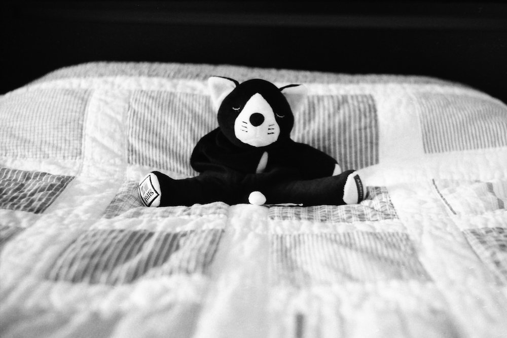 agfa rondinax 35 u 22-Cat-on-Bed-f-2.8-1-60-Sec