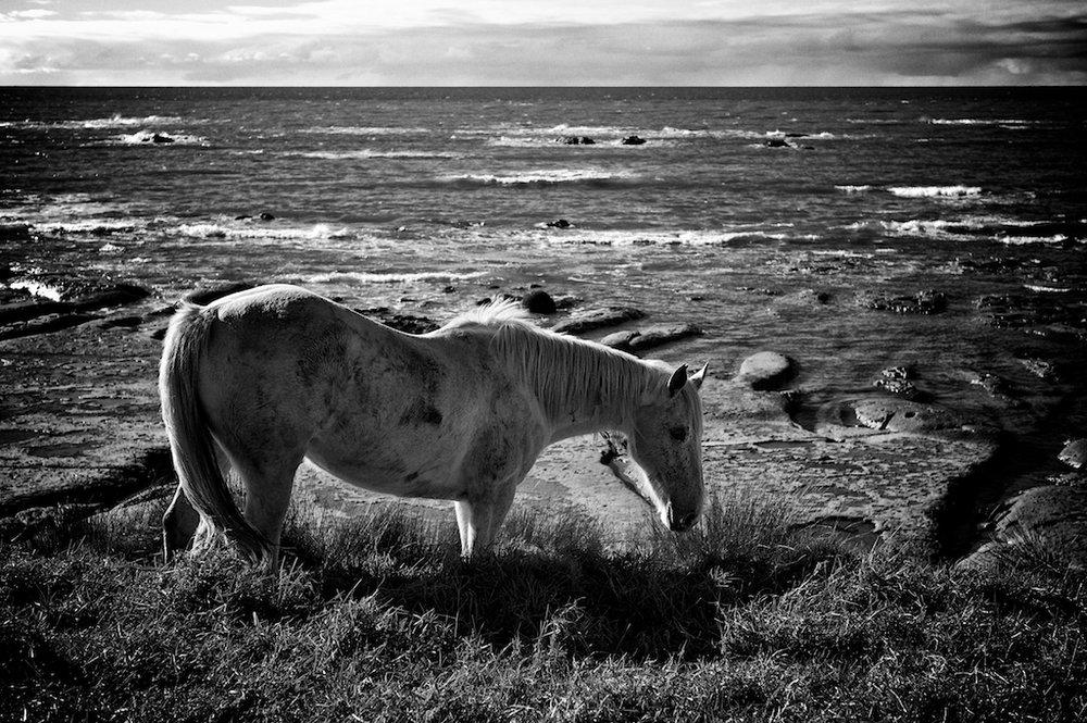 East-Cape-Horses