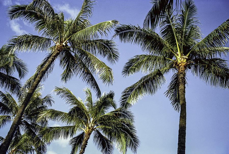 Two rolls in Oahu 15