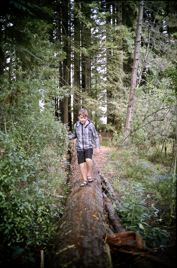 seeing a way back - boy walking on a fallen tree.jpg