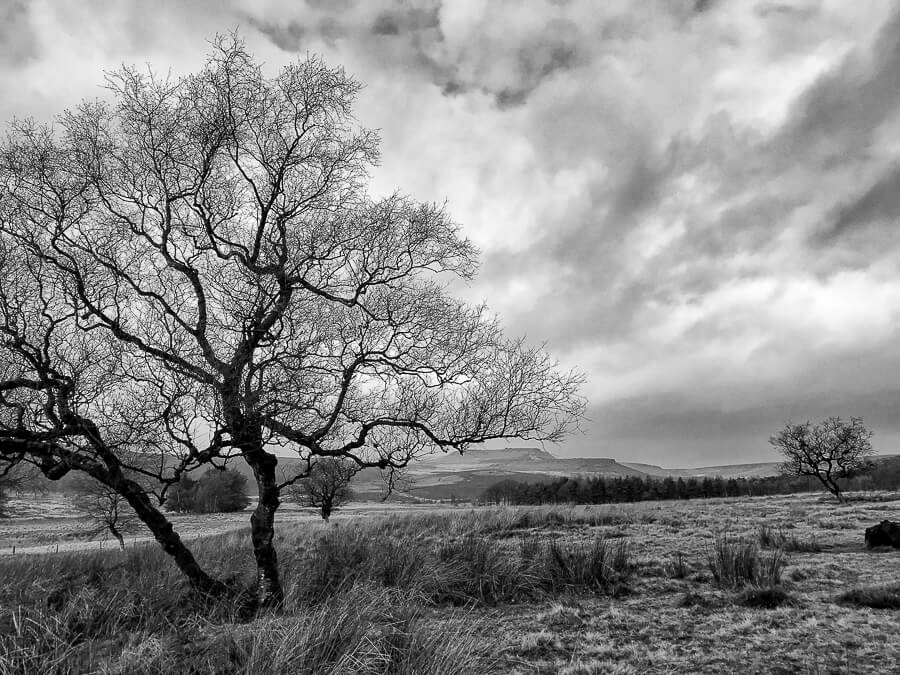 The Reluctant Photographer - Longshaw black and white landscape.jpg