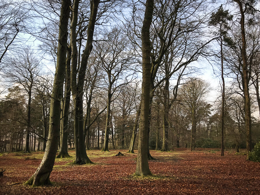 The Reluctant Photographer - Longshaw Woods.jpg