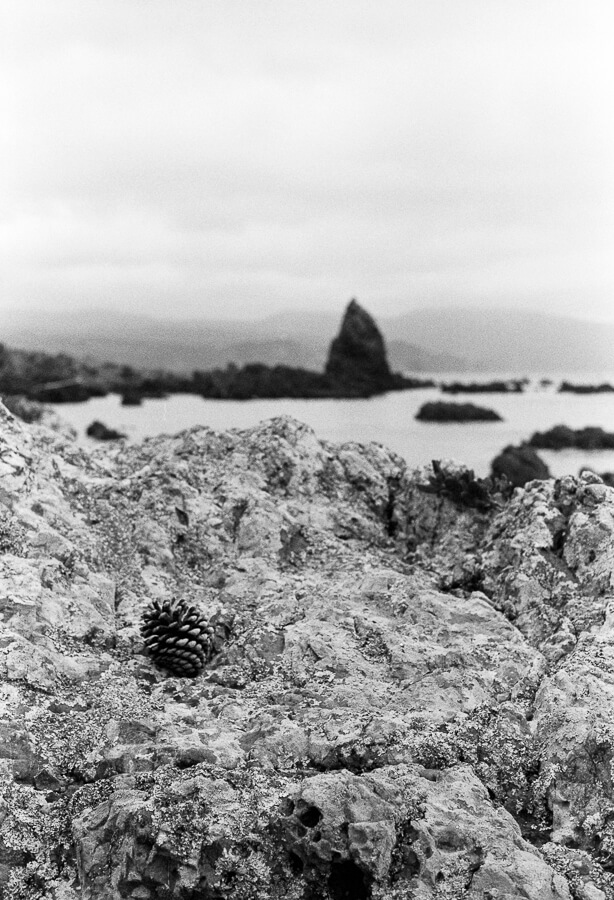 Ilford HP5 Plus - Around the Bays - Pine Cone on the Rocks.jpg
