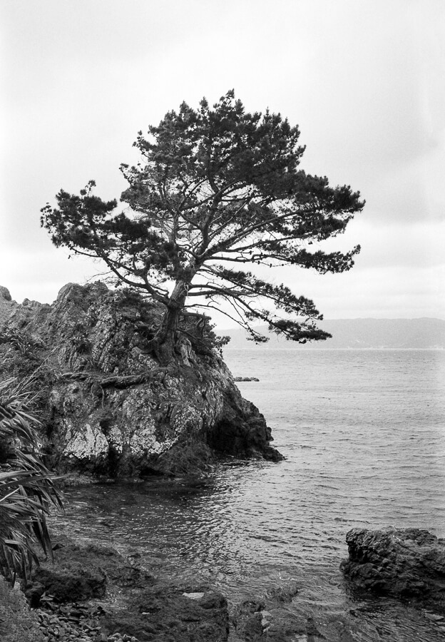 Ilford HP5 Plus - Around the Bays - Tree Overhanging the Sea.jpg