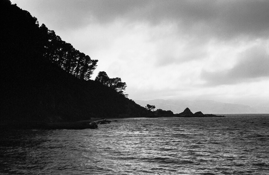Ilford HP5 Plus - Around the Bays - Siloutte of Tres on a Stormy Day.jpg