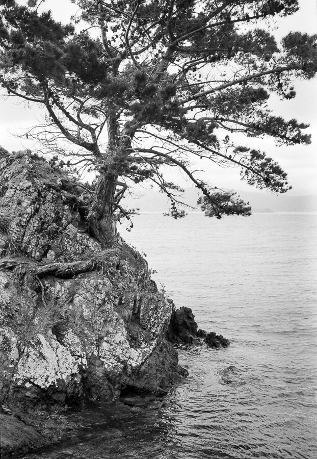 Ilford HP5 Plus - Around the Bays - Tree and Sea Closeup.jpg