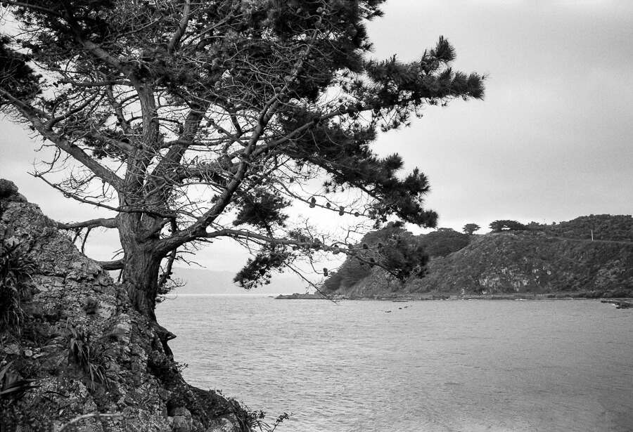 Ilford HP5 Plus - Around the Bays - Tree Overhanging the Water Closeup.jpg