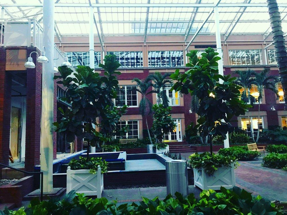The beautiful atrium that Alison cares for!