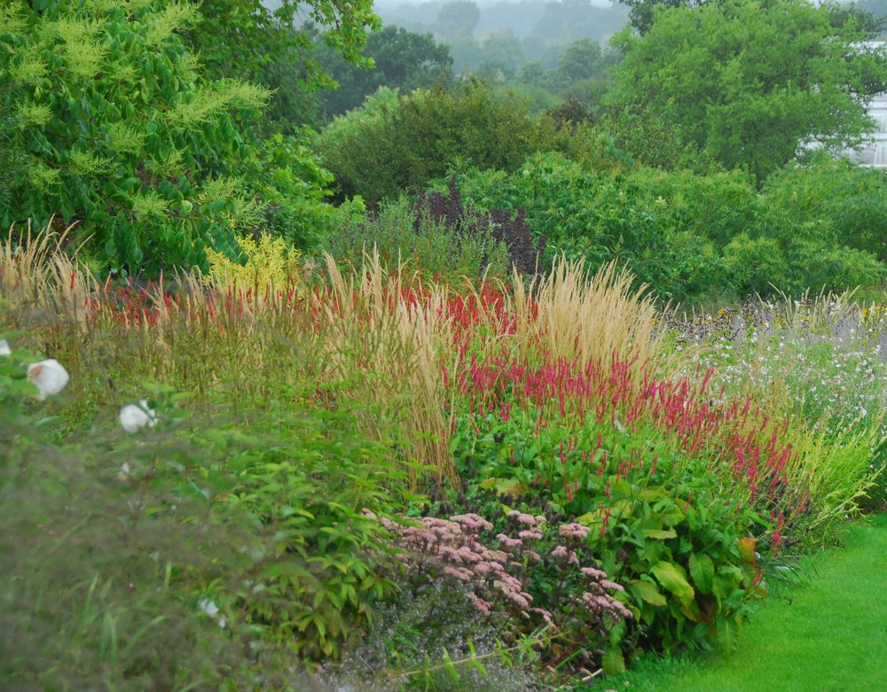 "WISLEY   ""Where else can you see and compare a traditional perennial border, double Piet Oudolf borders and a huge planting by Tom Stuart-Smith on one location? The home of the RHS might be a little institutional, but it is also fabulously instructional!"""