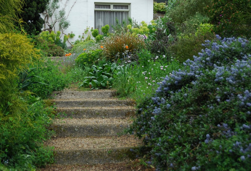 "BETH CHATTO'S GARDEN   ""Beth Chatto passed away in mid 2018, but her legacy is stronger than ever. Beth was a pioneer of unapologetically beautiful ecological planting, and an almost lone voice, prophesying the future of garden design. Her garden was her laboratory and playground."""