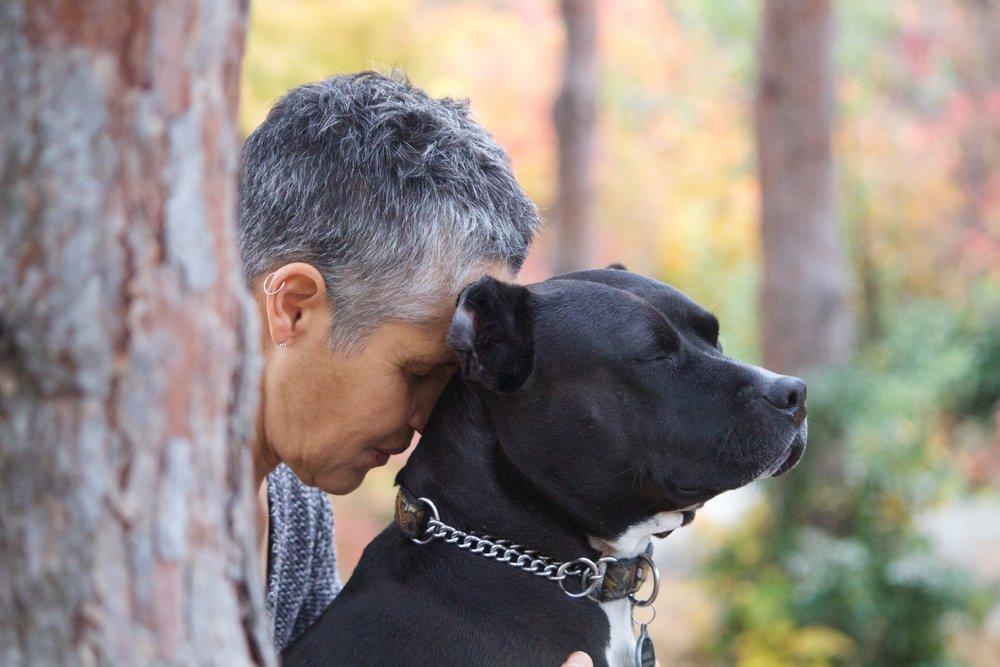 Dog training and pet training