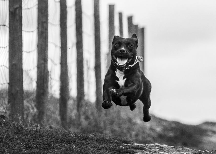 Manu mid leap, happy to be running freely.