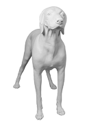 GermanShorthaired-01-s.png