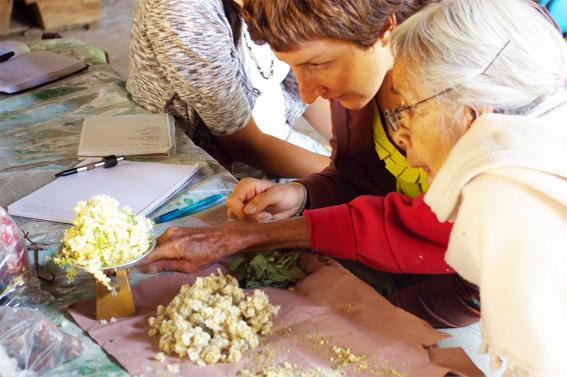 Yvonne Soehlemann fundadora de Floem con doña Vicenta Villalba de Amatlán de Quetzalcoatl pesando Gordolobo en la báscula.