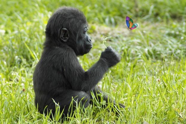 chimpance-53.jpg