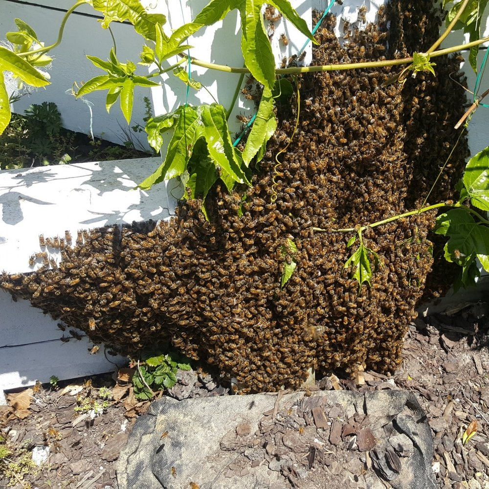 Bee Swarm on wall