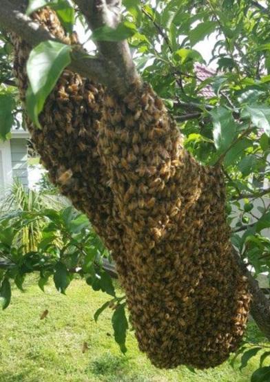 Bee+Swarm+10.jpg