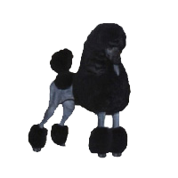 Canzone Standard Poodles