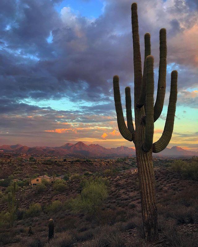 fountain hills cactus.jpg