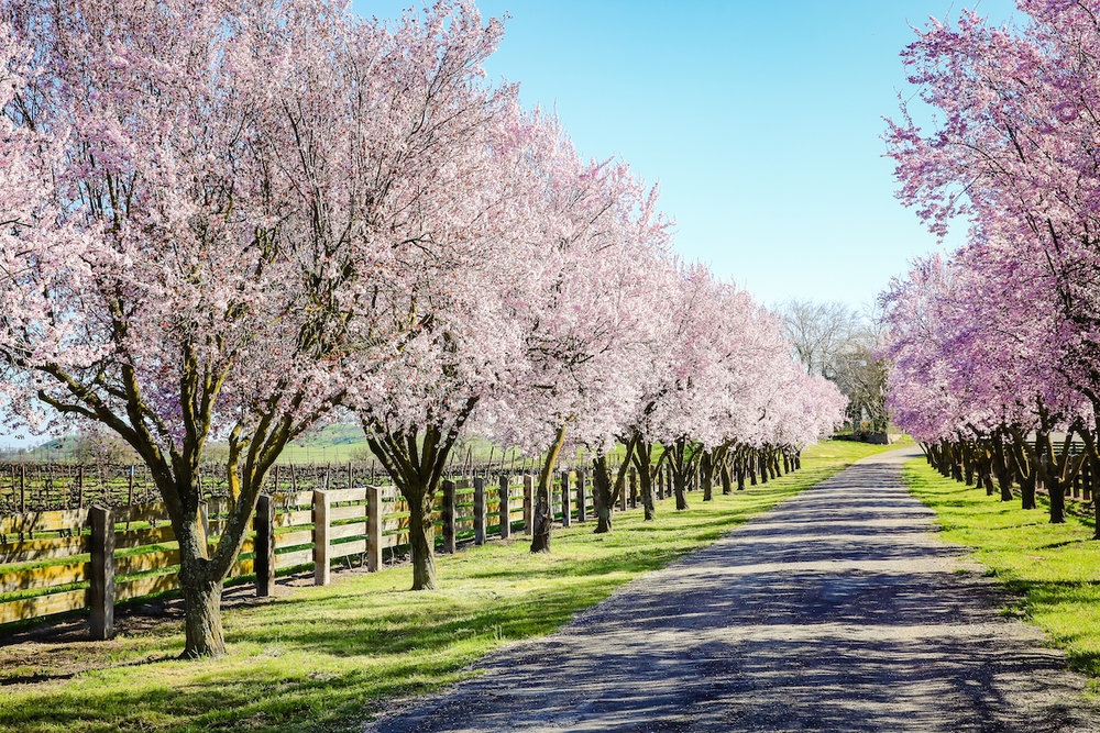 Vaccarezza Ranch-11good_earth_farms.jpg