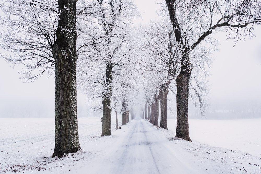 branch-cold-fog-839462.jpg