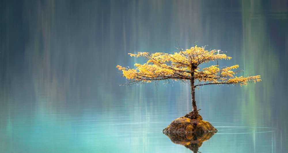 Mindfulness for Organizations -