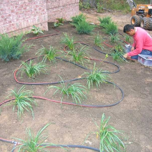 Commercial Lawn -