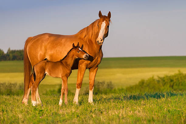 Services - The veterinarians and staff at Bear River Equine are ready to provide your horse with cutting edge veterinary medical care. From wellness exams and vaccines to advanced diagnostics and complex surgical procedures, your horse will receive high quality care.