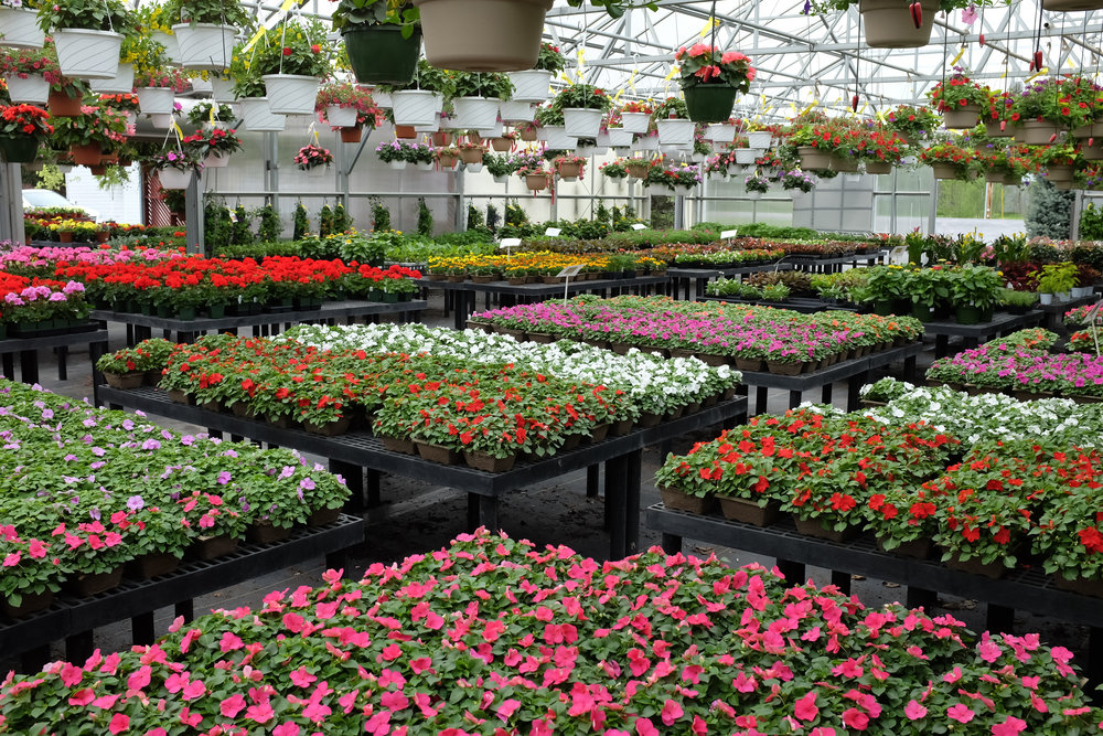 Flower Power - The only place to buy plants for your planter boxes or fresh-cut flowers for your dining room table is Devon Greenhouses. Devon offers a great selection at the best prices around.